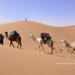 Marokko wird täglich sicherer