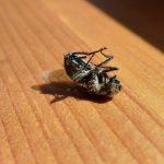 Selbstbetrug: Wie die Fliege am Fenster